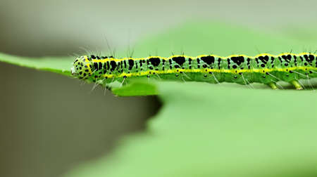 a cute caterpillar on leaf Stock Photo - 8611319