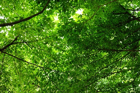 cool and refreshing under the shade of tree Stock Photo - 8671619