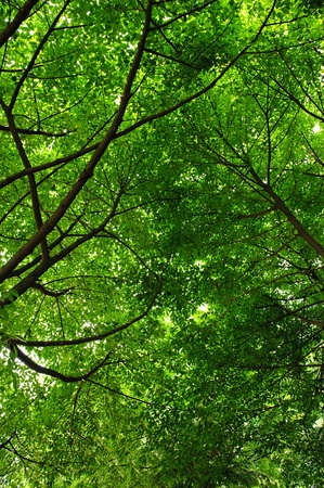cool and refreshing under the shade of tree Stock Photo - 8896662