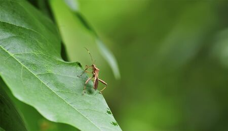 interesting stinkbug on green leaf Stock Photo - 9273944