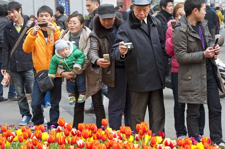 folwer: CHENGDU - FEB 7: People were shooting photos of tulips on a busy pedestrian shopping street in downtown during chinese new year on Feb 7, 2011 in Chengdu, China.