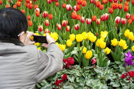 folwer: CHENGDU - FEB 7: A man is shooting photos of tulips on a busy pedestrian shopping street in downtown during chinese new year on Feb 7, 2011 in Chengdu, China.
