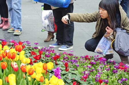 folwer: CHENGDU - FEB 7: A girl is shooting photos of tulips on a busy pedestrian shopping street in downtown during chinese new year on Feb 7, 2011 in Chengdu, China. Editorial