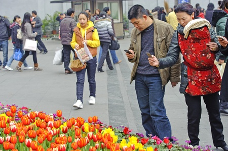 folwer: CHENGDU - FEB 7: A couple is shooting photos of tulips on a busy pedestrian shopping street in downtown during chinese new year on Feb 7, 2011 in Chengdu, China.