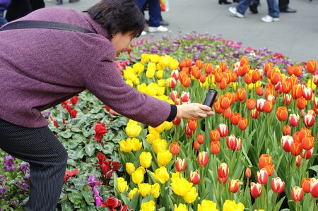 folwer: CHENGDU - FEB 7: A woman is shooting photos of tulips on a busy pedestrian shopping street in downtown during chinese new year on Feb 7, 2011 in Chengdu, China. Editorial