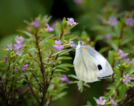 florets: a beautiful butterfly on florets