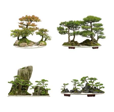 a cedar: recopilación de los mejores bonsáis de China con fondo blanco aislado