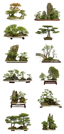 collection of the best china bonsai with white isolated background photo