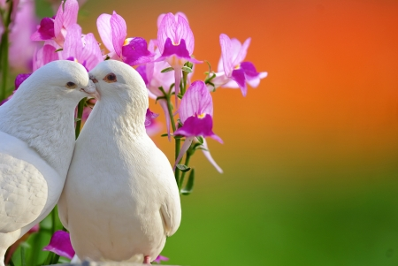 love birds: two loving white doves and butterfly orchid flower