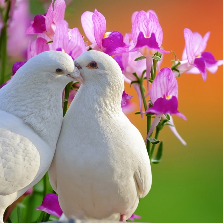 two loving white doves and butterfly orchid flower Stock Photo - 15076041