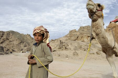 HURGHADA - JAN 30: Bedouin boy pulling a camel in Sahara desert.Jan 30,2013 in Hurghada,Egypt.