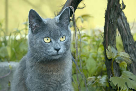 Gray cat outdoors near the bush vine Stock Photo - 7709022