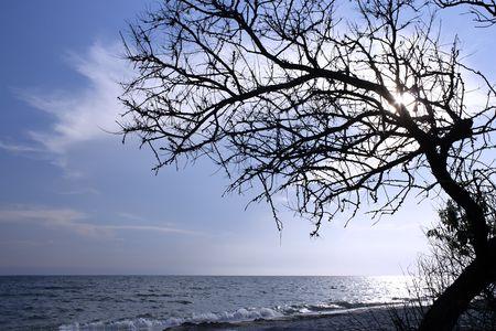 Dry tree above the sea. Kinburn Spit near Ochakiv, Ukraine photo