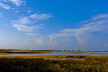 Overgrown salt lake near the sea. Nesting sites of dozens of bird species. Kinburn Spit near the town Ochakiv, Ukraine