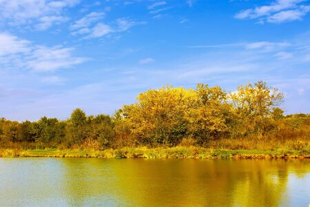 Yellow trees on the lake in the bright autumn weather photo