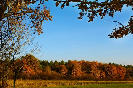 windless: Forest land in autumn colors. In the foreground branches of oak and other trees