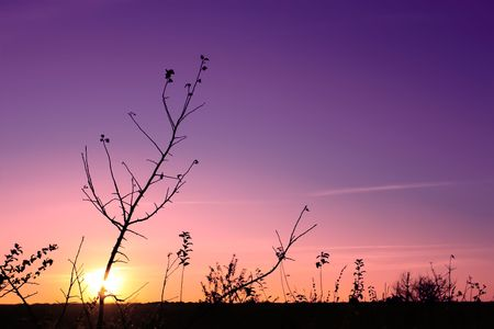 Sunset in the fall (II). Silhouettes of tree and weeds in the foreground. The multicolor glow Stock Photo