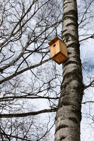 Bird house hanging on the trunk of a birch. Beginning of winter photo