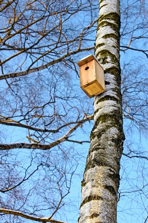 Birdhouse hanging on the trunk of a birch. Bright frosty winter day Stock Photo