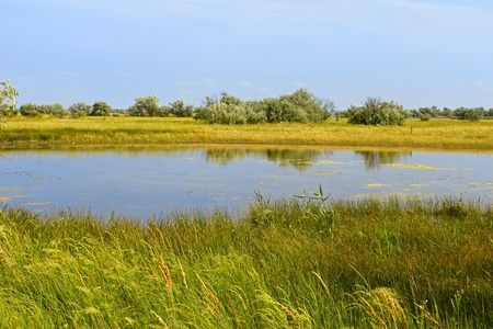 marsh plant: Salt lake near the sea. Kinburn Spit near the town Ochakiv, Ukraine Stock Photo