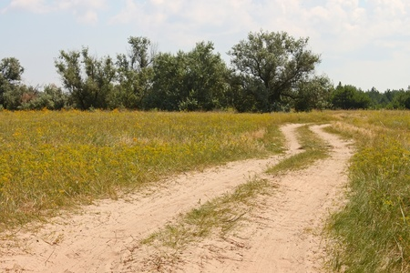 Rural sandy road among meadows and trees photo