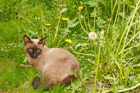 Beautiful cat lying on the green grass in the yard Stock Photo