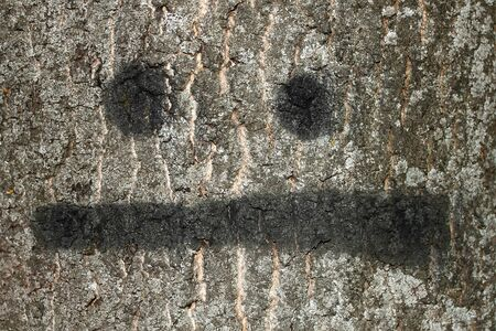 The bark of big old tree with painted smile photo