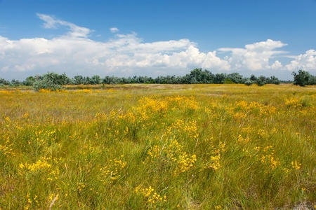 Various summer grass, wildflowers and on the meadow. Kinburn Spit, Ukraine photo
