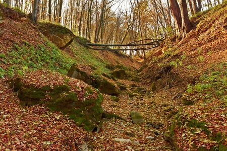Ravine in the forest. Limestones covered with green moss among the fallen leaves. Falling tree through the gully photo