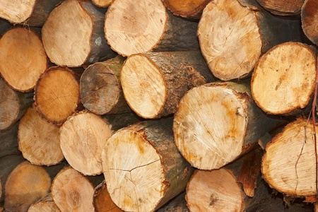 Heap of sliced wooden logs close up Stock Photo