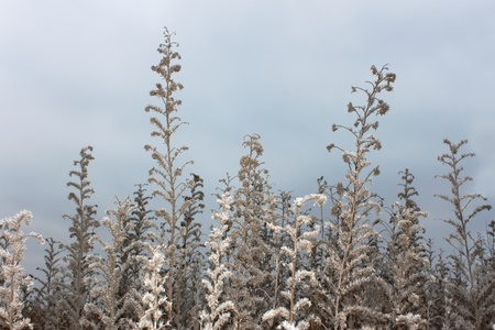 Dried wild grass in late autumn against the background of cloudy sky photo