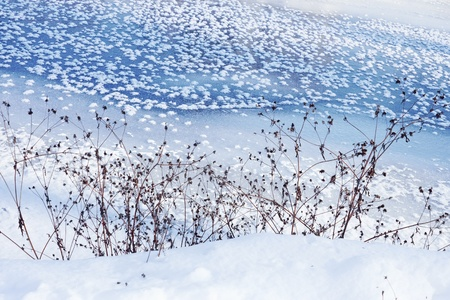 zoned: Winter scene. Coastal dried plants on the background of frozen river