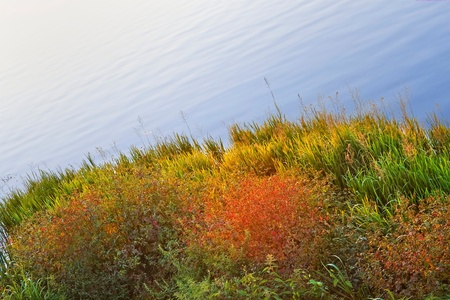 Colourful coastal plants at reservoir in autumn evening time photo