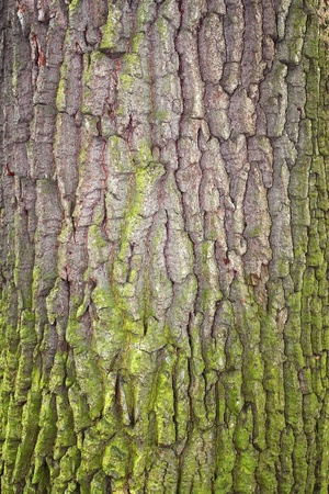 Fragment of tree bark partially covered with green moss Stock Photo