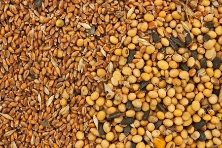 Fodder blends for domestic animals from soybean seeds, sunflower seeds and cereal grains photo