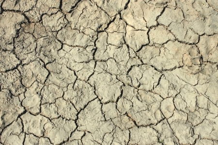 aridness: Deep cracks in the dried soil as a texture