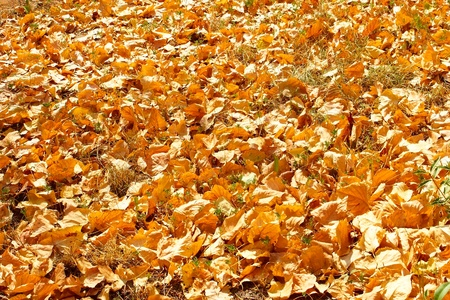 Autumn yellow leaves lying on the grass in fine sunny day photo
