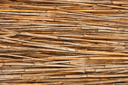 Detail of reed fence as a texture Stock Photo - 14844980