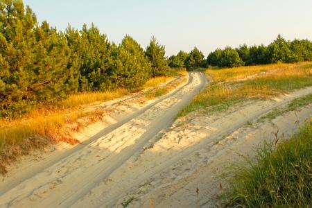 Sandy soil: Tenedor carretera en suelo arenoso entre bosques de pino joven en vigas del sol poniente. Kinburn Spit cerca Ochakiv, Ucrania