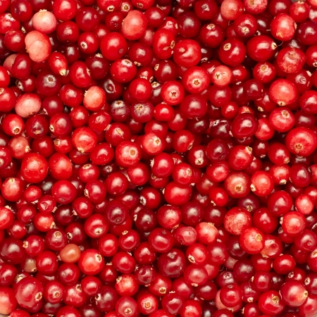 Many small ripe cranberries as a texture photo