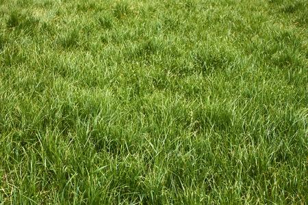 meadow  grass: Hierba de prado en la primavera de gusano tiempo soleado