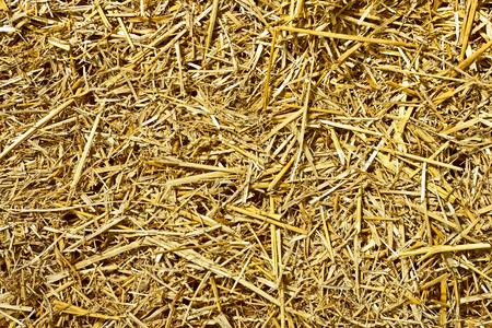 Paja de trigo cortada en pedazos como una textura Foto de archivo