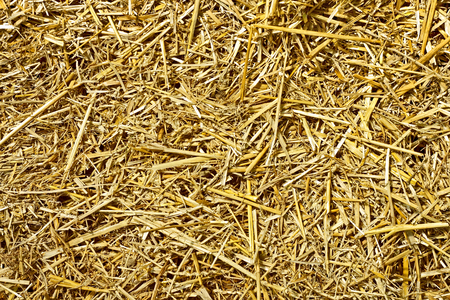 Roughly chopped wheat straw as a texture Stock Photo