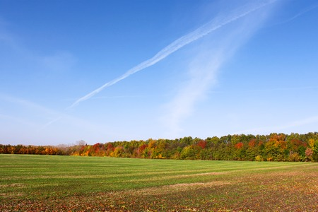 winter wheat: Picturesque autumn rural landscape with sowed winter wheat field, colorful forest edge and blue cloudless sky with airplanes traces