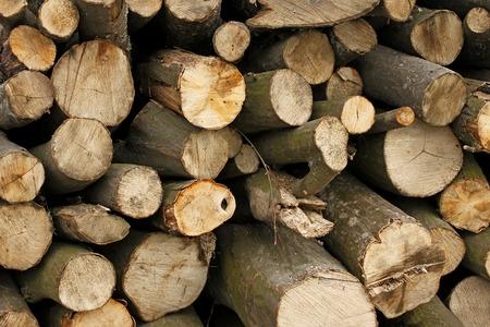 hornbeam: Big pile of hornbeam chopped logs for firewood close-up Stock Photo