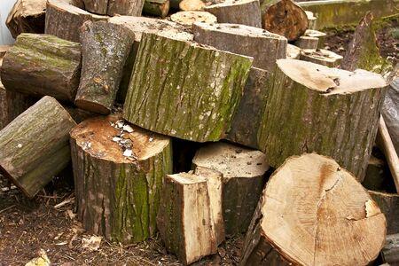 hornbeam: Pile of big hornbeam chopped logs for firewood Stock Photo