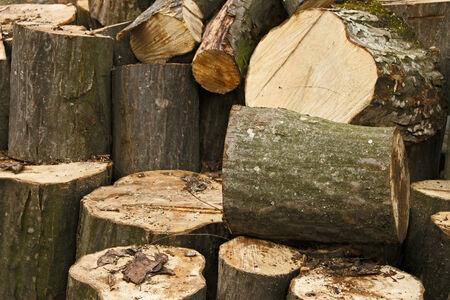 hornbeam: Heap of big hornbeam chopped logs for firewood