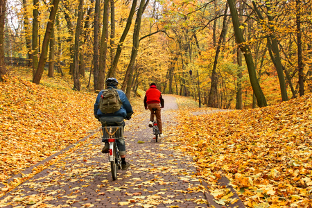 bicyclists: Bicyclists ride on a paving alley in park covered with yellow autumn leaves