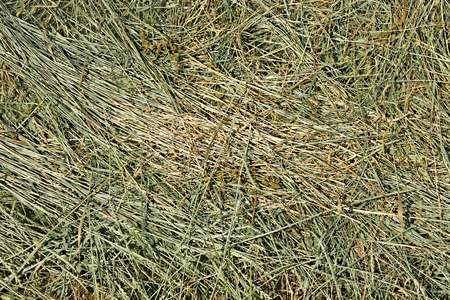 good quality: Dries hay with cereal herbs and other wild meadow grasses as a texture, good quality feed for farm animals