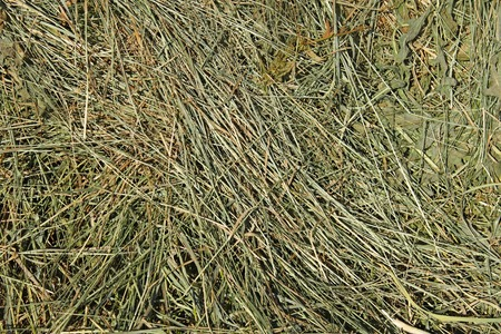 good quality: Dries hay with cereals and other wild meadow herbs as a texture, good quality forage for cattle Stock Photo